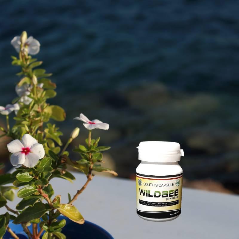 Obat Asam Urat Paling Manjur » Wildbee Kapsul